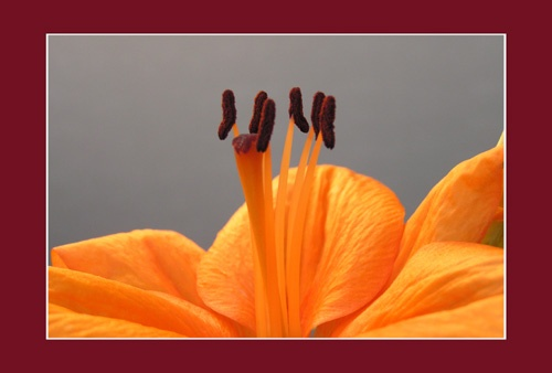 Close up - Flower 2 by aseshuk