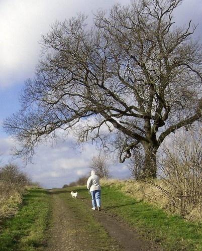 A Winter Walk by Hobo