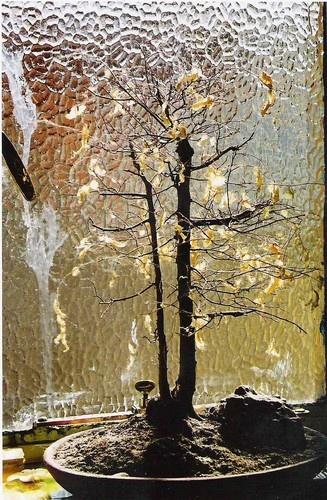 Dead bonsai by Denell