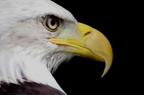 Eagle eye by Nick-T