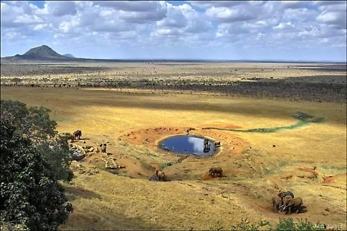 Voi Lodge Watering Hole by Kim Walton