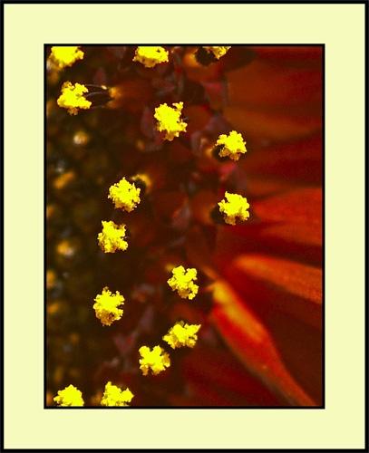 A Little Sunflower by Tom_H