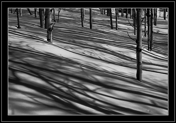 Aspen Shadows by billma