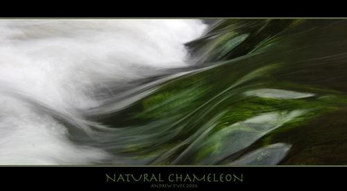 Natural Chameleon by afyfe