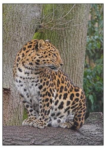 Leopard mum by maggiem