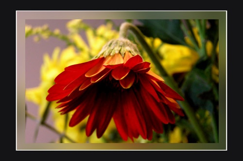 Flower 5 by aseshuk