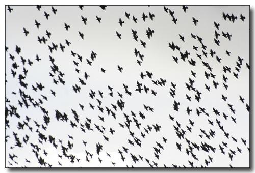 The Birds by Mavis