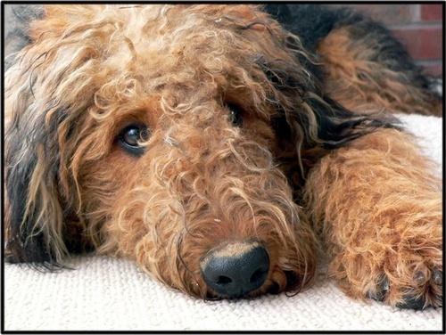 Muddy and Sleepy by Sweetpea