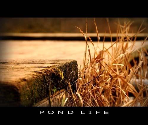 PondLife by Dek22