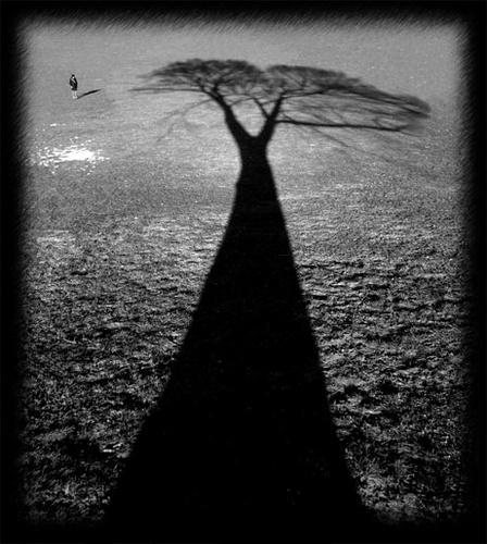 Cornelia and the Big Tree by MrSpencer