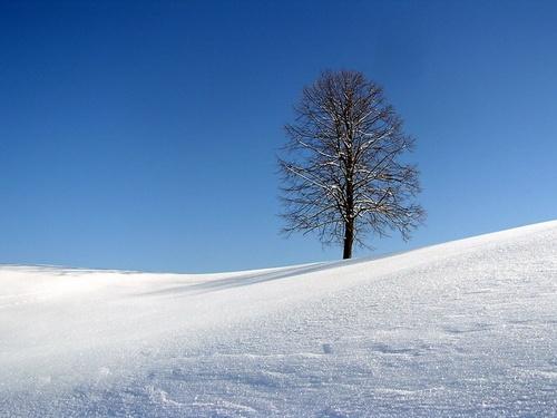 Sunny Day by Mirko