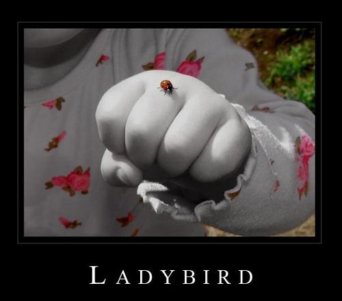 Ladybird by Kevlar