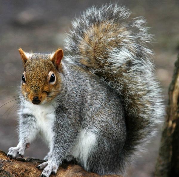 Squirrel by Saxon Marsh