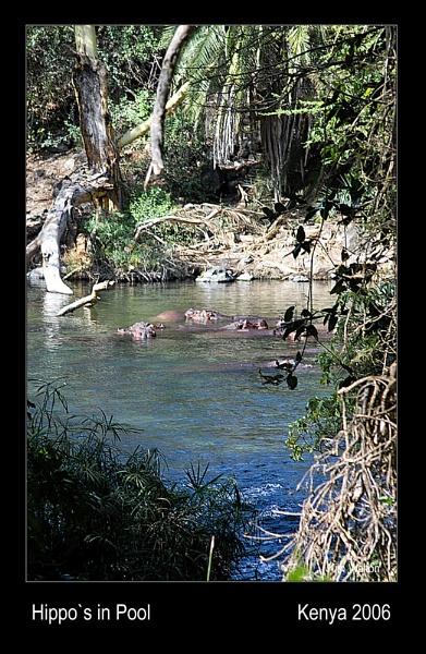 Hippos in Pool by Kim Walton