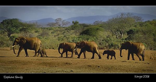 Elephant Family by Kim Walton