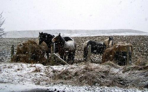 Cold Horses by bono