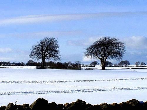 Winter by bono