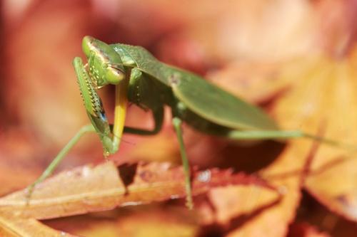 Menacing Mantis by brad