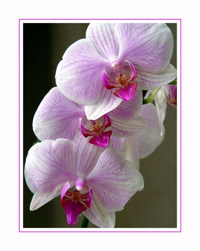 Orchid by riggers