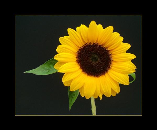 flower 134 by lizziew