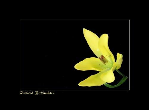 Second Flower by trickydicky