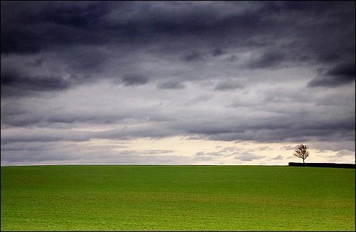 lone tree by paulstefan
