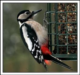 Woopecker