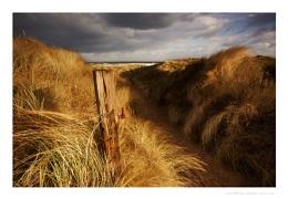 Marram Wind