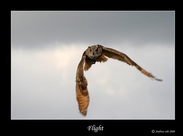 Flight II by Cole