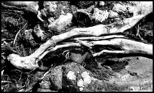 Dead Tree by Leef