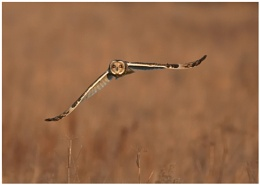 SE-Owl Hunting
