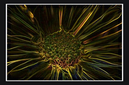 Digitized Flower by aseshuk