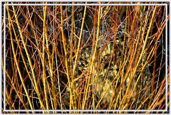 golden stems by laingdonaldson