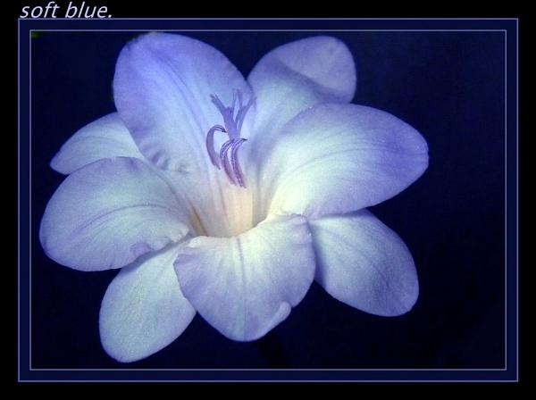Soft Blue. by sunshot