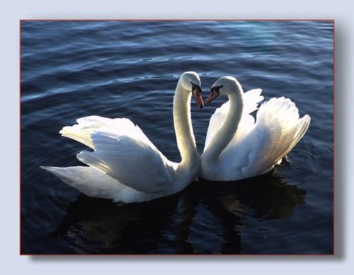 Forever together by Mavis