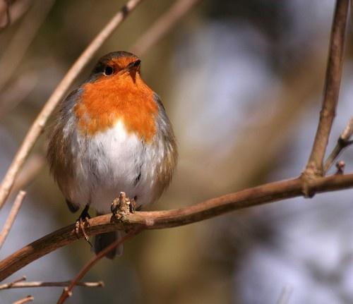 Round Robin by cantona43