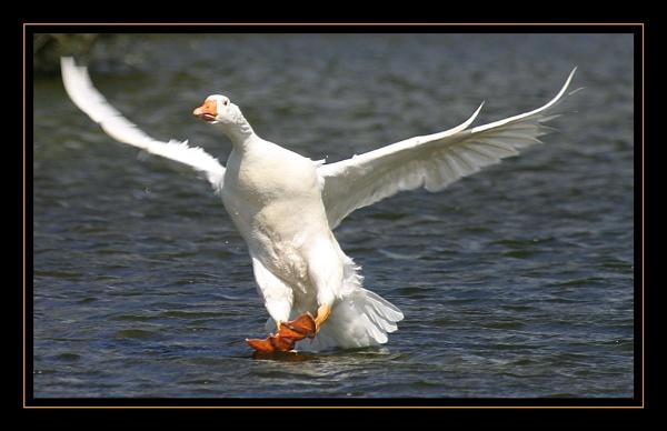 Landing by kwaterworth