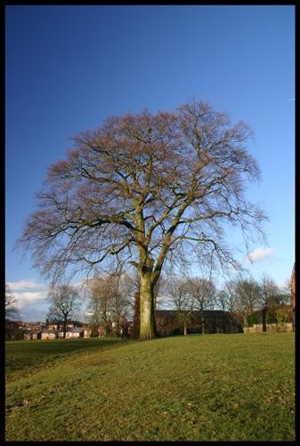 By ye\'old oak tree by OPHITE_ZONE