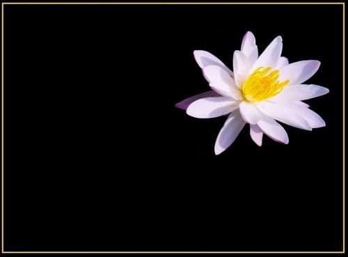 Lily by rajasekaranamie