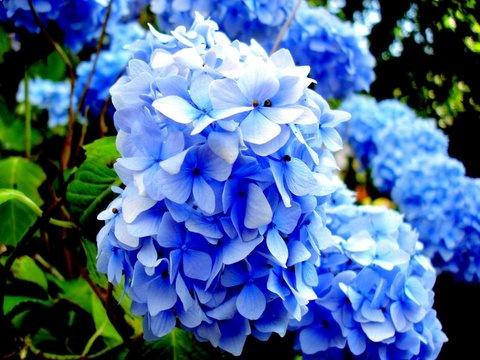 blue by mongogushi