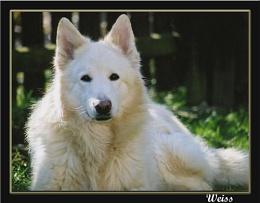 Weiss