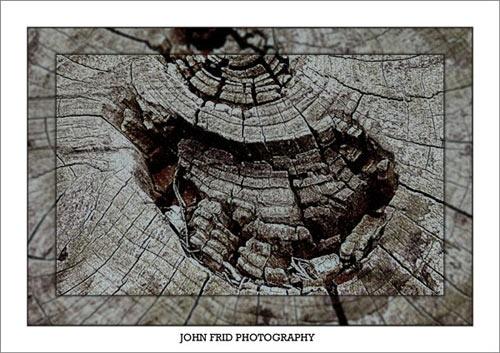 Tree Grain by John_Frid