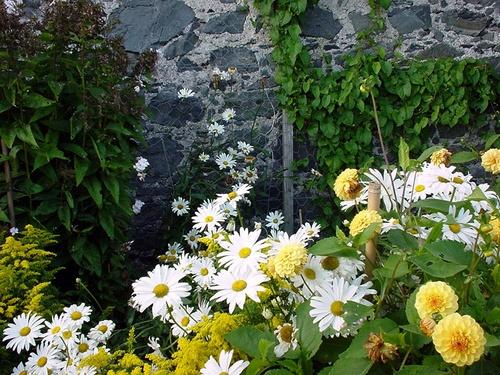 Stone Wall and Flowers by marymangru