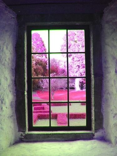Pink View by marymangru