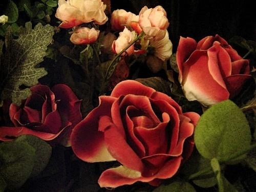 Red Roses by marymangru