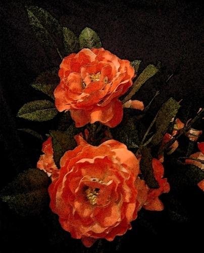 Orange Roses by marymangru