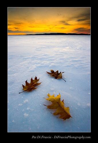 Fallen Seasons by Timecatcher