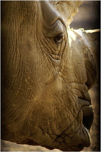 Rhino Neil by Snapper_T