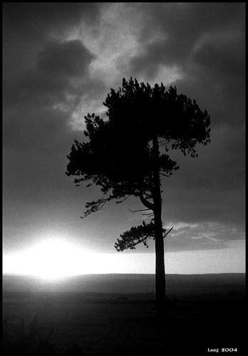 Dark Tree by Leef