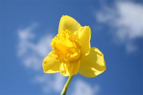 Spring by fredforsyth